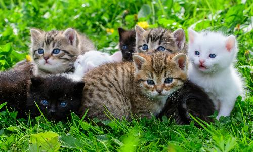 main of What You Need To Know About Cat Adoption