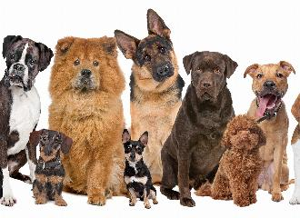 thumbnail of Which Breed of Dog is Right For You?